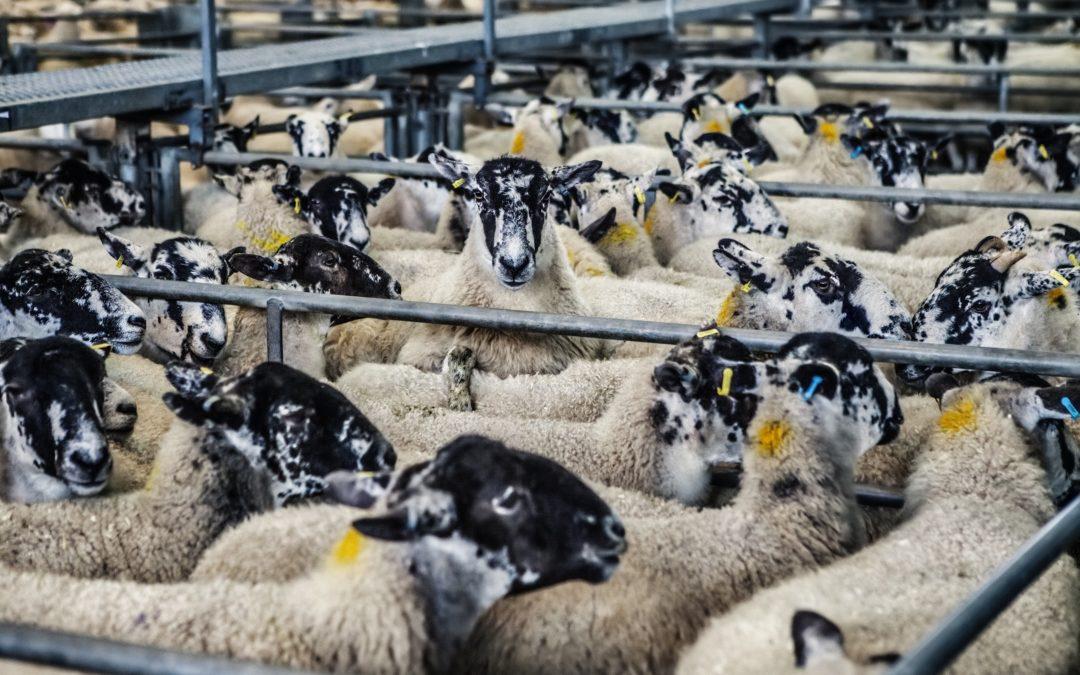No more antibiotics for healthy animals?