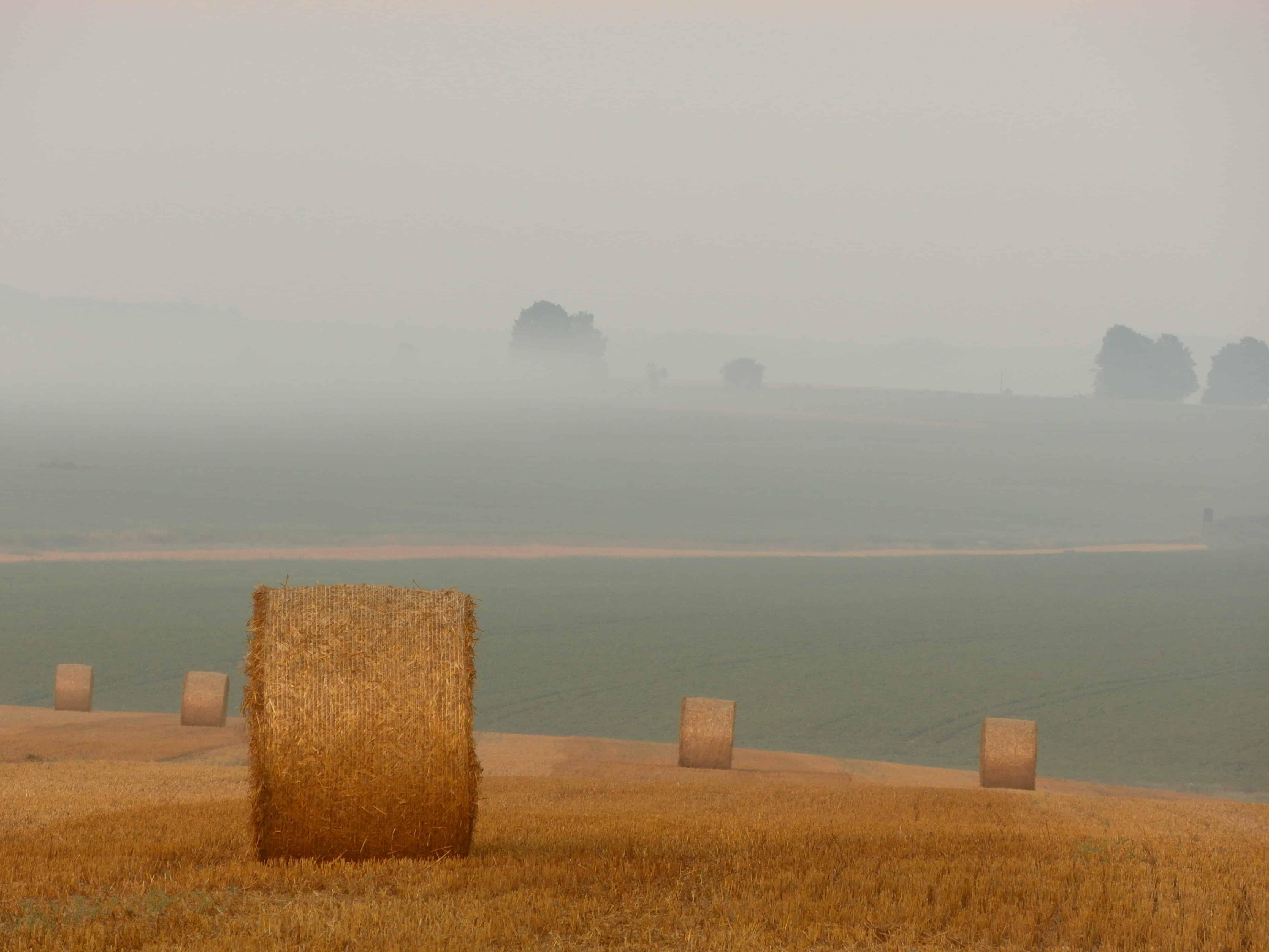 Public Health, Agriculture, health, farming, antibiotics, food environments