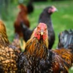 Joint Letter I Less and better: Call for policy action on animal farming