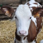How the new CAP can support the reduction in use of farm antibiotics