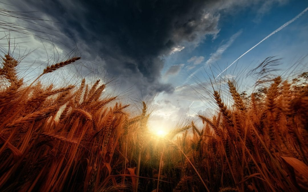 A silent revolution: chief scientific advisors breathe life into EU food policy