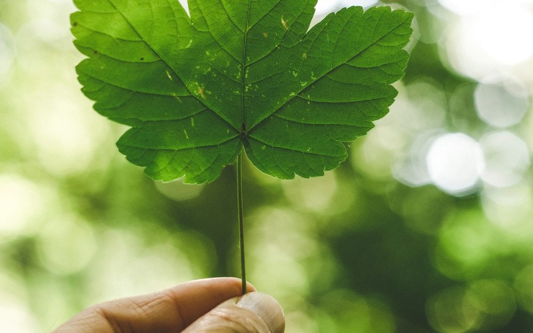 A Healthy European Green Deal?