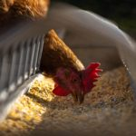 Joint letter I Steps needed to meet the EU ban on routine use of antimicrobials in animal farming