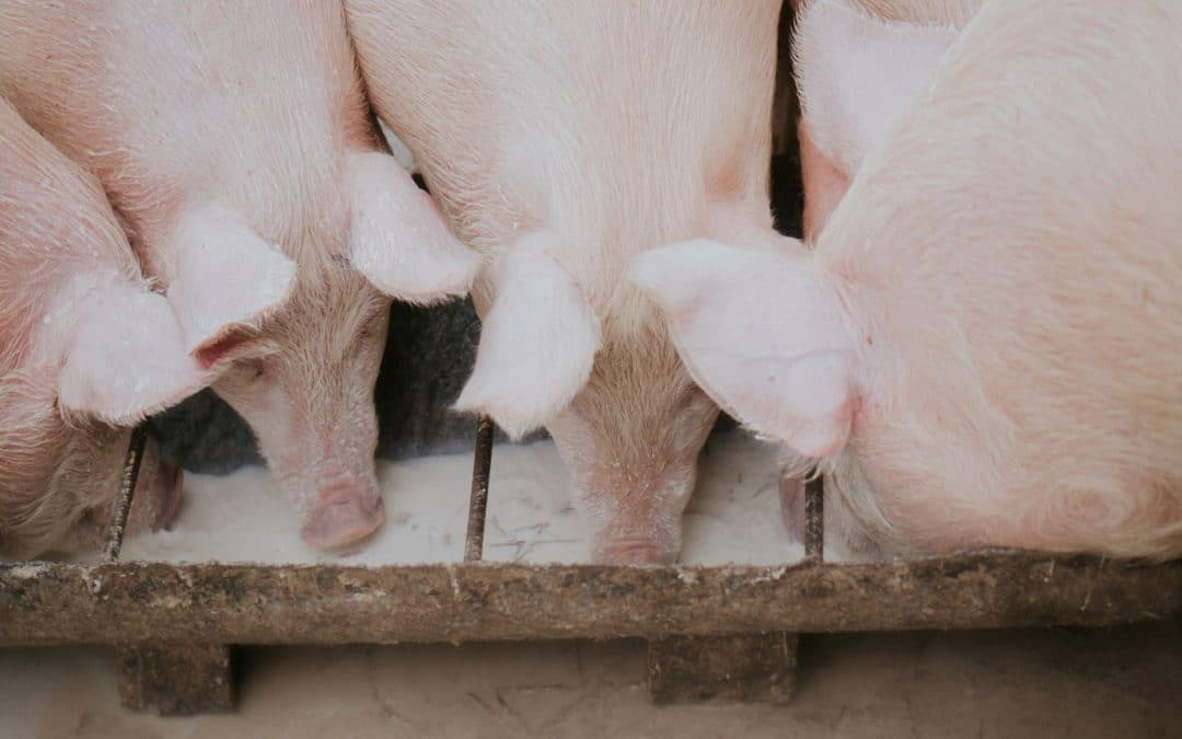 Tackle excessive use of antibiotics and introduce mandatory animal welfare labelling for more sustainable animal farming, EPHA says